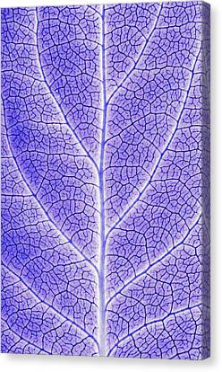 Monotone Close Up Of Leaf Canvas Print by Sean White
