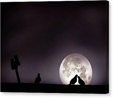 Moon With Love Pigeon Canvas Print by Mhd Hamwi