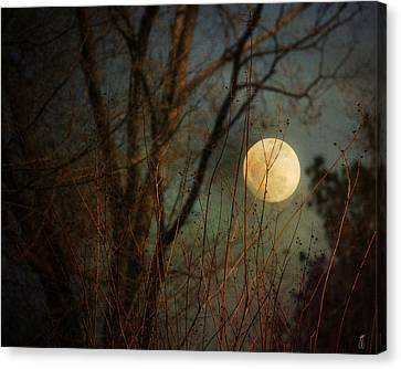 Moonrise Canvas Print by Jai Johnson