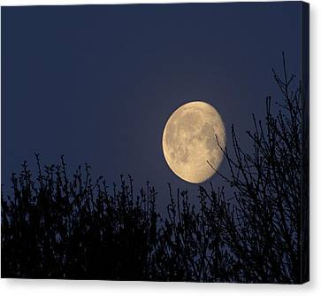 Moonset Over Trees Canvas Print by Doris Rudd Designs, Photography