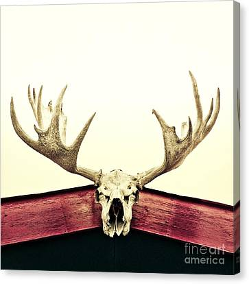 Moose Trophy Canvas Print by Priska Wettstein