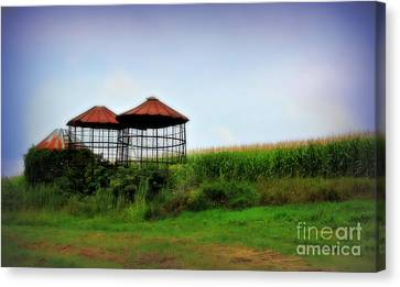 Morning Corn Canvas Print by Perry Webster