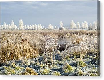 Morning Frost Canvas Print by Duncan Shaw