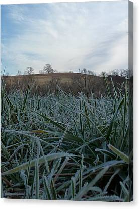 Morning Frost Canvas Print by Felix Concepcion