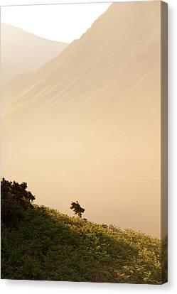 Morning Haze Canvas Print by Svetlana Sewell