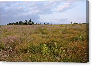 Morning On Grassy Ridge With Ferns Canvas Print by Keith Clontz