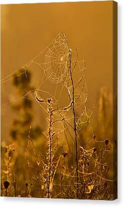 Morning Web Canvas Print by Joshua McCullough