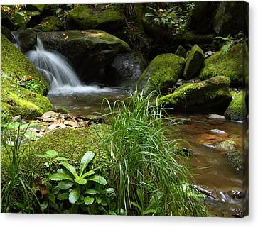 Moss And Water And Ambience Canvas Print by Andrew McInnes