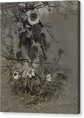 Mother And Child Reunion Canvas Print by Susan Capuano