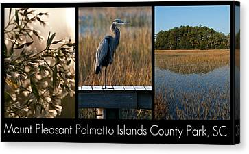 Mount Pleasant Palmetto Islands County Park  Canvas Print by Melissa Wyatt