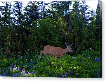 Mount Rainier Deer Canvas Print by Lynn Bawden