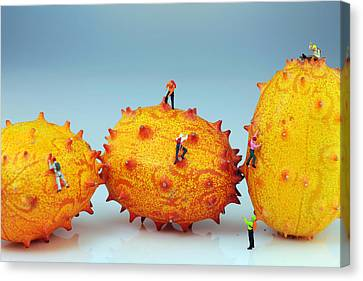 Mountain Climber On Mangosteens II Canvas Print by Paul Ge