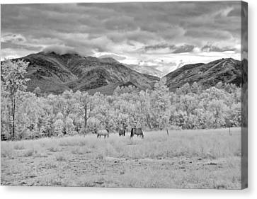 Mountain Grazing Canvas Print by Joann Vitali