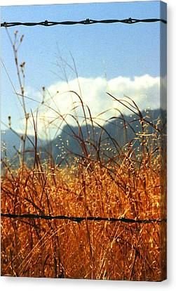 Mountain Wheat With Barbwire Canvas Print by Jaye Crist