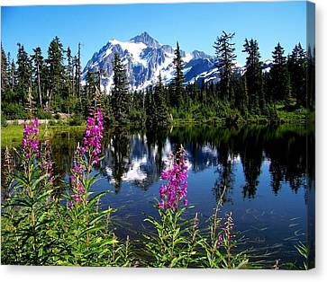 Mt. Baker Reflections Canvas Print by Glenn McCurdy