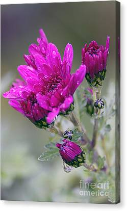 Mum With Raindrops Canvas Print by Sharon Talson