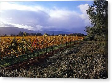 Mumm Napa Vineyard Canvas Print by Richard Leon