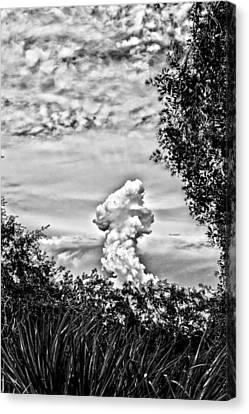 Mushroom - Bw Canvas Print by Nicholas Evans