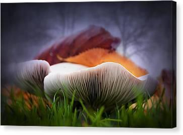 Mushrooms Close Up Canvas Print by Svetlana Sewell