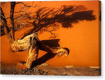 Namibia 2 Canvas Print by Mauro Celotti