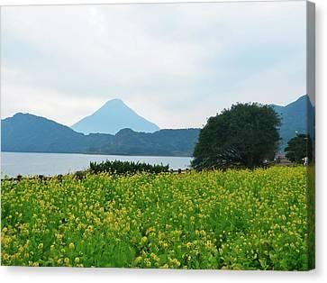 Nanohana (rape Blossoms) Canvas Print by Kurosaki San