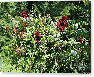 Natchez Trace Wild Sumac Canvas Print by Theresa Willingham