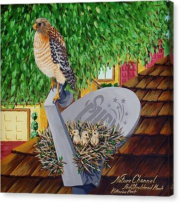 Nature Channel- Red Shouldered Hawk Canvas Print by Katherine Young-Beck