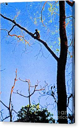 Nepal Monkey Watching Canvas Print by First Star Art