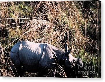 Nepal Rhino In The Wild Canvas Print by First Star Art