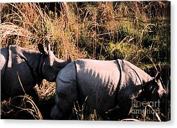 Nepal Rhinos In The Wild Canvas Print by First Star Art