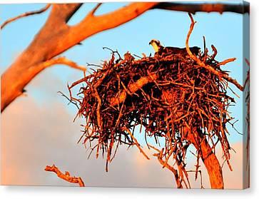 Nest Canvas Print by Barry R Jones Jr