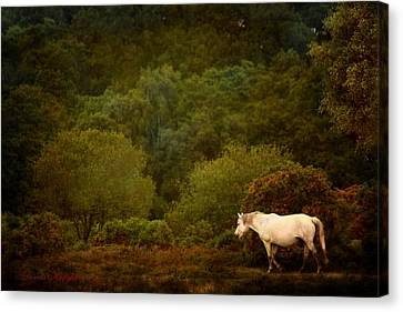 New Forest Walk Canvas Print by Dorota Kudyba