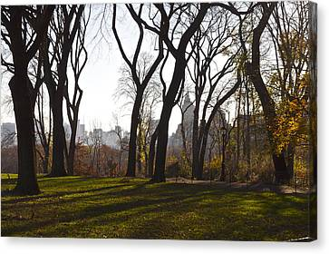 New York Trees Canvas Print by Snow  White