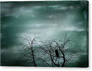 Night Owl Canvas Print by Georgia Fowler