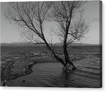 No Tree Is An Island Canvas Print by Jeff Moose