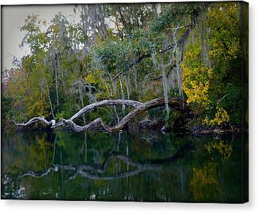 North Florida River Reflections Canvas Print by Carla Parris