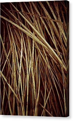 Of Needles And Haystacks Canvas Print by Odd Jeppesen