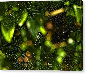 Oh The Web We Weave Canvas Print by Barbara Middleton