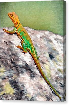 Oklahoma Collared Lizard Canvas Print by Jeff Kolker