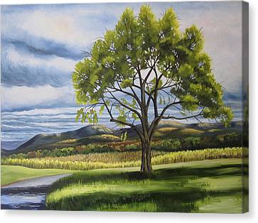 Old Apple Tree Canvas Print by Linda L Doucette