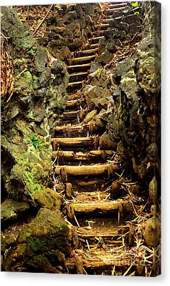 Old Forest Steps Canvas Print by Dean Harte