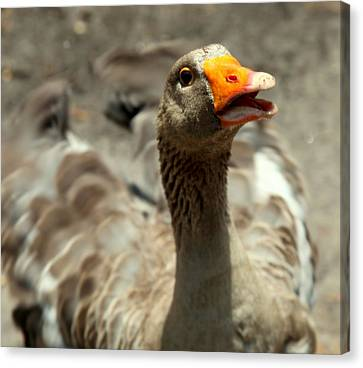 Old Mother Goose Canvas Print by Karen Wiles