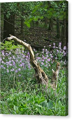 Old Stump 7383 1762 Canvas Print by Michael Peychich