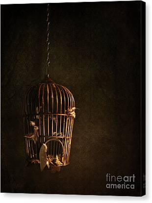 Old Wooden Bird Cage With Feathers Canvas Print by Sandra Cunningham