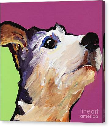 Ollie Canvas Print by Pat Saunders-White