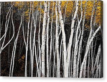 On The Edge Canvas Print by The Forests Edge Photography - Diane Sandoval