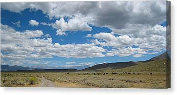 On The Range Canvas Print by Kirk Williams