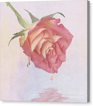 One Drop Of Love Canvas Print by John Edwards
