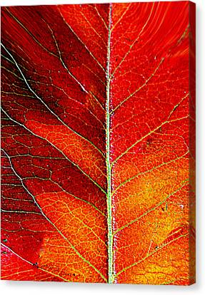 Orange In Autumn.... Canvas Print by Tanya Tanski