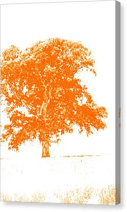 Orange Oak Canvas Print by Alan Look